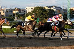 DSCF9354 (keita matsubara) Tags: urawa urawakeiba keiba horse race saitama japan