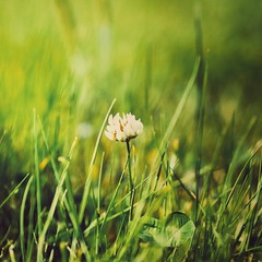 A Scene of Springtime (Jon-F, themachine) Tags: jonfu 2016 olympus omd em5markii em5ii em5mkii em5mk2 em5mark2  mirrorless mirrorlesscamera microfourthirds micro43 m43 mft ft      snapseed japan  nihon nippon   japn  japo xapn asia  asian fareast orient oriental aichi   chubu chuubu   nagoya  outdoors  nature  plants  grass