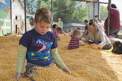 The Corn Box - Playing with Food (aaronrhawkins) Tags: corn box sandbox kids children play bury playground fun shirts stuff festival fall autumn harvest heehawfarms farm pleasantgrove utah joshua dig pile halloween pumpkinpatch aaronhawkins