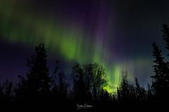 Auroras (spwasilla) Tags: aurora auroraborealis northernlights light night nightsky canon7d tokina1116mm alaska longexposure