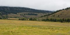Grand Teton National Park (gunigantip) Tags: green gtnp grandtetonnationalpark grandtetons tetons nationalpark