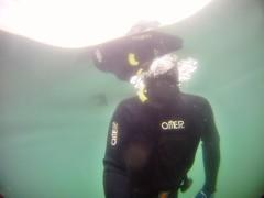 GOPR5931 (ambrogi_taubate) Tags: naturezaselvagem marinha mergulhando ubatuba sp brasil naturezamarinha fantstica apneia 10m setembro primavera 2016