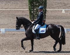161023_Aust_D_Champs_Sun_Med_4.3_6573.jpg (FranzVenhaus) Tags: athletes dressage australia siec equestrian riders horses performance event competition nsw sydney aus