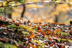 Autumn day (Dennis.Photography1) Tags: out autumn leaves happu happy moss stecak