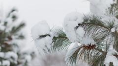 Winter Wonderland At Whitnall Park-25 (Ben Roeger) Tags: park winter snow wisconsin bokeh january waterfalls snowfall blizzard winterwonderland freshsnow stickysnow frozenwaterfall whitnallpark winterphotography fluffysnow milwaukeeparks january2015