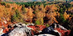 brown-nature-tree-leaf-autumn-france-ile de france-fontainebleau-301-large-sig (Touma) Tags: brown france color tree art nature photography iledefrance fontainebleau