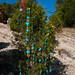Trees_of_Loop_360_2014_071