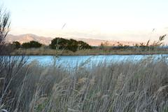 plumeros paisaje (alfonsovalgar) Tags: rio paisaje guadalhorce desembocadura plumeros