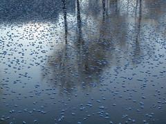 Even the lake has sometimes spotty coat! (Axiraa - back very soon) Tags: winter white lake ice frozen frost estonia järv jää härmatis saadjärv tartumaa külm vanagram äksi
