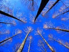 Tree Silhouette in Blue Sky