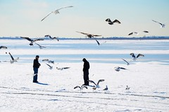 Men And Seagulls On Jamaica Bay (Joe Shlabotnik) Tags: nyc newyorkcity seagulls ice birds bay frozen queens jamaicabay howardbeach faved 2015 broadchannel afsdxvrzoomnikkor18105mmf3556ged february2015