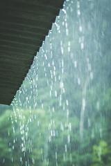 i pljuskove sto osvezavaju (encapsulated gist (Neda Mojsilović)) Tags: roof green rain forest torrent