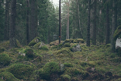 Forest I (Victor Rosenqvist) Tags: world trees nature animal forest canon 50mm sweden hiking hike mysterious 5d tele scandinavia northern tamron 600mm vsco 5dmk2