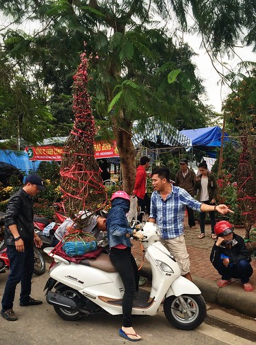 Buying a cherry tree for Tet, Hue, Vietnam