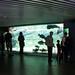 Visiting+the+aquarium