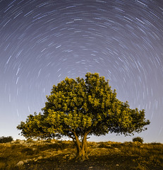 Alone with a Million Stars... (Alex Savenok) Tags: longexposure sky tree night stars israel nikon nightsky stacking f28 polaris modiin d610 circumpolar israelnature starstrail samyang14mm starstax barfilia