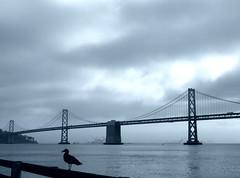 California2015-15 (Felson.) Tags: ocean sanfrancisco california trip travel bridge sky usa mist holiday bird water fog clouds bay honeymoon nuvole seagull ponte cielo norcal nebbia acqua viaggio vacanza frisco oceano uccello baia oaklandbaybridge