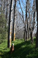 Woodland (Heart felt) Tags: winter light newzealand children masterton earlyspring wairarapa springiscoming henleylake