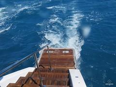 W-IMG_2621 (baroudeuses_voyage) Tags: ocean sea coral oz australia diving snorkeling cairns reef greatbarrierreef cay eastcoast australie atoll gbr michaelmascay oceanspirit grandebarrieredecorail