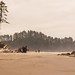 The Beach to Themselves 2nd Beach Washington Coast