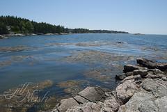That water... (grilljam) Tags: august2016 summer seamus 4yrs