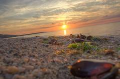 (Estella Sheehan) Tags: clouds ocean water rocks seaweed muscles shells sand evening shortbeach northshore ny longisland longislandsound beach sunset sunshine canon summer