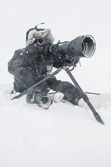 Respecting the wild: Introducing Nikon Europe Ambassador, Vincent Munier (I Am Nikon Europe) Tags: bear white wolf wildlife arctic pro polar subzero wildlifephotography