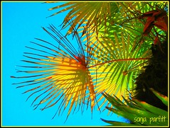 summer days (Sonja Parfitt) Tags: tree palm westend st denman vancouver