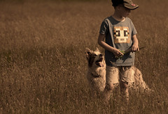 Summer (A child in the night) Tags: flowers boy wild summer evening child time ben walk sheepdog luke meadow bordercollie