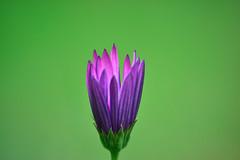 Inside (luenreta) Tags: 7dwf crazytuesday aboutme flor inside