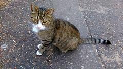 Friendly kitty (Moldovia) Tags: htconem8s phonecamera cat animal feline catnipaddicts catpix catalog catspotting