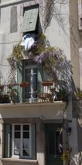 Wisteria Airing (davidpemberton78) Tags: saintponsdethomires lhrault languedocroussillon wisteria balcony