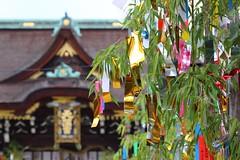 Tanabata (Teruhide Tomori) Tags:        kyoto japan kitanotenmangushrine kitanotenjin tanabata bamboo decoration tradition culture