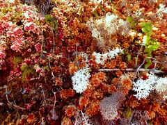 P1040729 (Tricefala Photo) Tags: nature naturaleza colores colors lquenes musgo