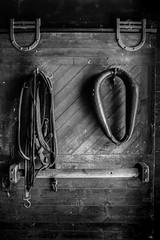 in the barn (jfl1066) Tags: centraljersey holmdelpark longstreetfarm monmouthcounty nj newjersey centraljerseyphotography
