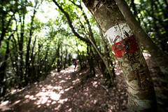_DSC5268.jpg (SimonR91) Tags: lamerosse fiastra sibillini montisibillini regionemarche marche italy italia mountains lake trekking beauty nikon nikond750 clouds sun blades redblades