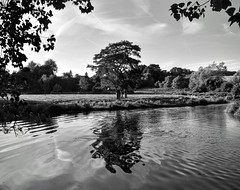 Liquid Reflections (hall1705) Tags: tree reflection liquidreflection west sussex d3200 mono river