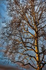 IMG_0169 (penfoto) Tags: 2013 california downey dusk sunset lakewoodblvd