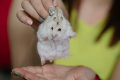 IMGL5955 (J45PERP) Tags: churro hamster