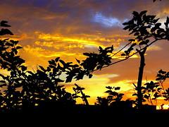 New York Sunset (dimaruss34) Tags: newyork brooklyn dmitriyfomenko image sky clouds tree foliage autumn fall