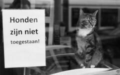 No dogs allowed (Arne Kuilman) Tags: nikon f100 analogue orwo un54 blackandwhite iso100 amsterdam nederland netherlands scan epson v600