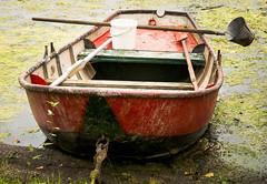 Kahn auf der Woy (GeorgKazrath) Tags: boote boat wasser water see lake fischen fishing kahn niederrhein niedermrmter nikon nikond300 nikondslr 60mm angelboot nikonafs60mm