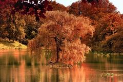 Herbstimpression (Werner Thorenz) Tags: herbst weiher gewässer ostpark düsseldorf thorenz autum water see wasser herbsstimmung teich laub wernerthorenz