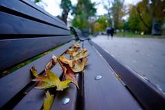 Evening Stroll (Yoan Mitov) Tags: fuji xt10 fujifilm simulation samyang 12mmf2 sofia bulgaria 2016 leaves fall autumn bench park evening closeup
