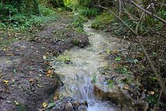 Barton Hills 2016 (tonycostin) Tags: barton hills bartonleclay bedfordshire nature chiltern