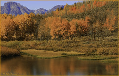 Teton Fall Color Show - Oxbow Bend - GTNP (wallawallaswede) Tags: antelope grizzly oxbowbend barns sheepelk
