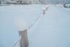 積雪 (TKBou) Tags: winter snow japan kyoto 京都 日本 雪 冬 kamogawa 鴨川 加茂川 tkbou