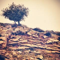 Good morning dear friends. Using Walden for the first time as a filter what do you think? Took this in #Maaser_el_Shouf, #Lebanon #shoufcedarreserve #livelovelebanon #Nikon #Nikon70_200 (A. Saleh) Tags: lebanon nature nikon saleh asaad instagram ifttt