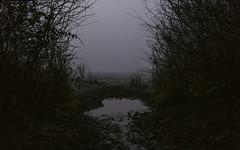 out (Morgan Tedd) Tags: morning england blackandwhite mist nature fog canon warwickshire stratforduponavon vsco vscofilm