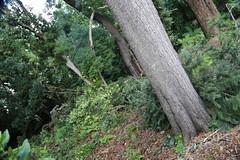storm damage wombat hill botanic gardens daylesford 2015_0062 (gervo1865_2 - LJ Gervasoni) Tags: wild storm heritage history weather 1 march windy australia down mini victoria micro damage burst tornado daylesford 2015 bursts drafts photographerljgervasoni